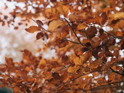 Conseils pour la conduite en automne : Comment gérer les feuilles mortes et la pluie